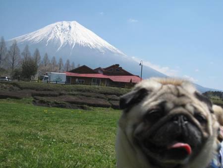 富士山とみゅうみゅう
