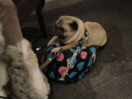 れおんままバッグの上が大好き