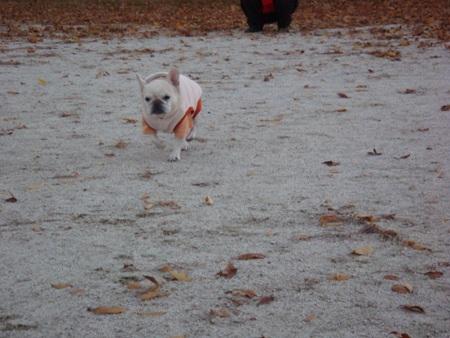 4本足で走るパオ