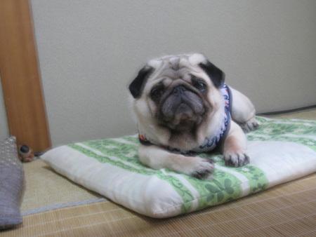 文太邸で地蔵犬