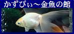 【かずぴぃ~金魚の館】へ
