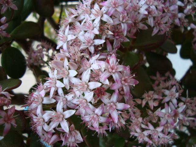 10-3-銭の花.JPG
