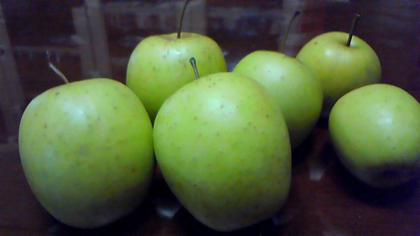 8-9-22 青林檎収穫.JPG