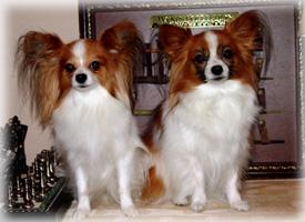 2009-12-03 21;47_DSC06646 -200