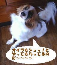 20091107133043.jpg