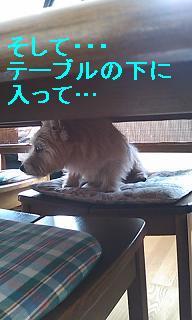 テーブル下4