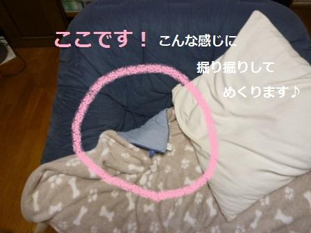 P1030853nedoko1.jpg