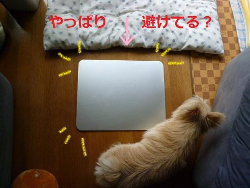 hiehie2_20110727220900.jpg