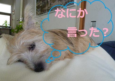 nemui_20110722003316.jpg