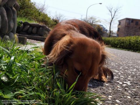草に夢中な犬
