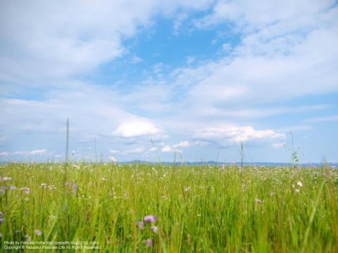 草むらと空