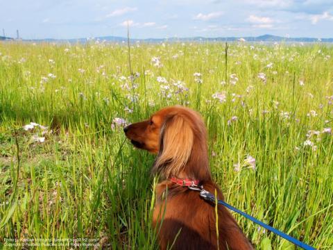 三浦海岸の草むらと犬
