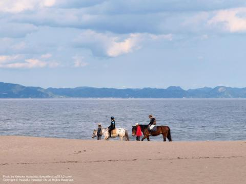 三浦海岸と馬