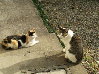画像8猫s_320