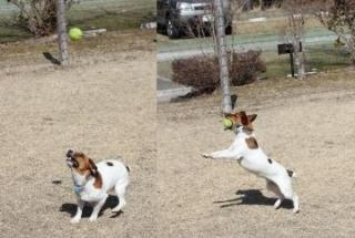tennis ball catching - 2