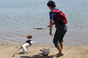 9月伊豆 海で棒を投げる1
