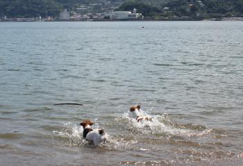 9月伊豆 海で泳ぐ