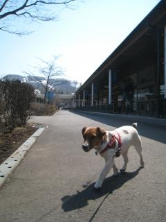 軽井沢アウトレットを散策するピート