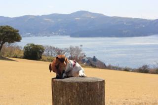 箱根 湖をバックにピート