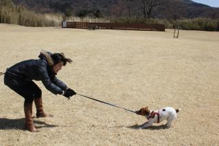 箱根で綱引き