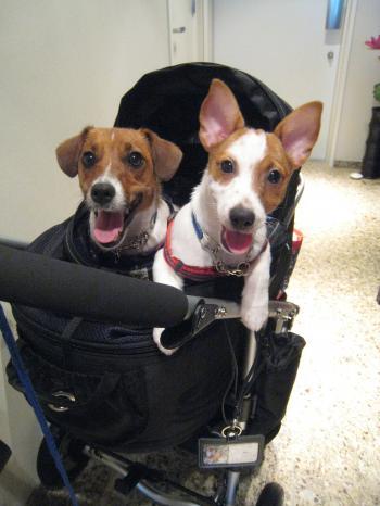 バギーで出発前のピートとリリィ