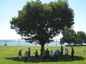 暑くて木陰に集まるワンコと人間達
