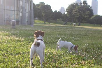 6月23日芝生をぶらつくピートとリリィ