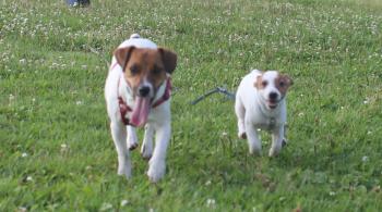 6月23日走るピートとリリィ