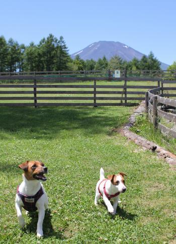 7月23日富士山をバックにピートとリリィ
