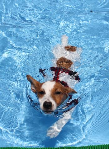 7月23日ミニプールで泳ぐリリィ