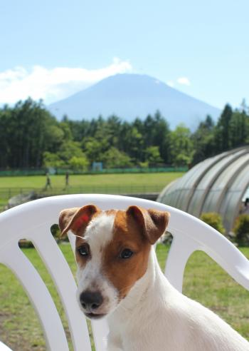 7月23日富士山をバックにリリィ