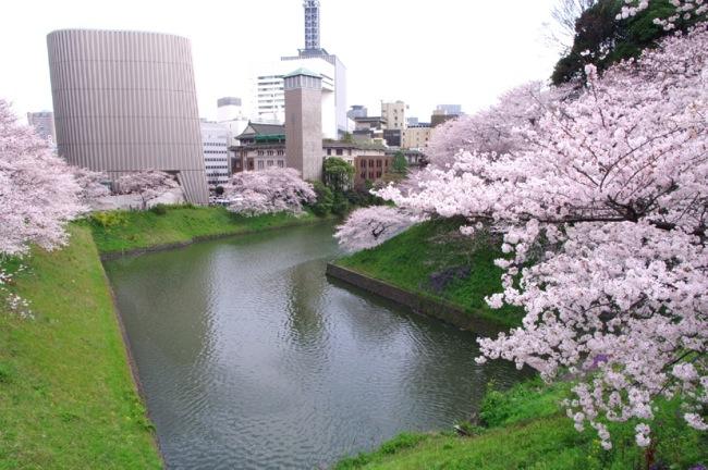 '10桜1
