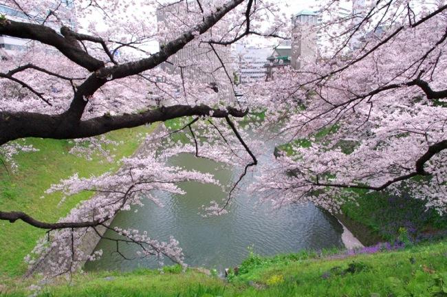 '10桜2