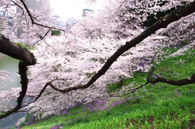 '10桜3