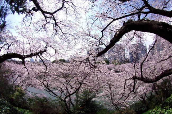 '10桜7