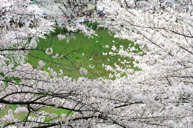 '10桜8