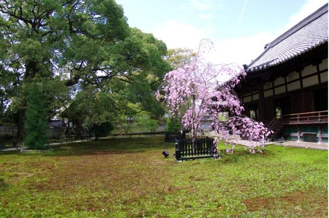 '10桜107
