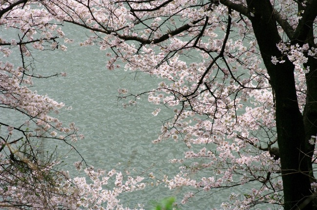 '10桜11