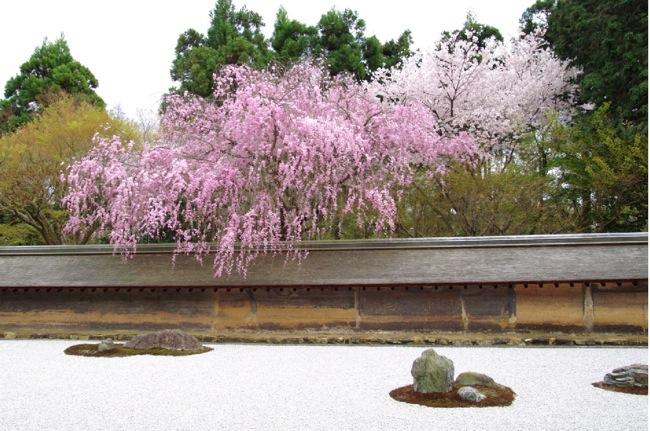 '10桜110