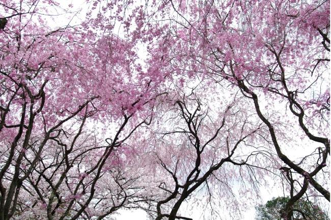 '10桜111