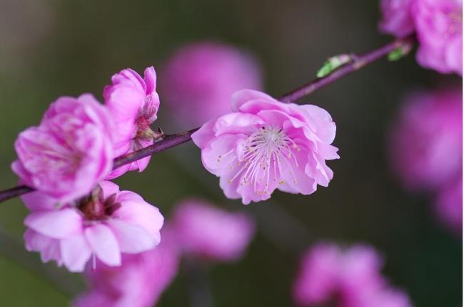 '10桜117