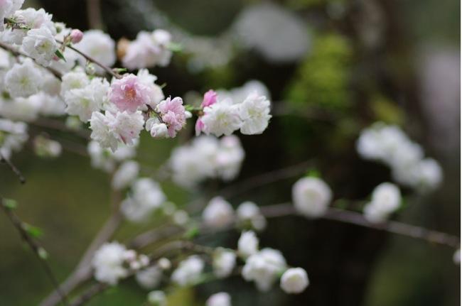 '10桜118