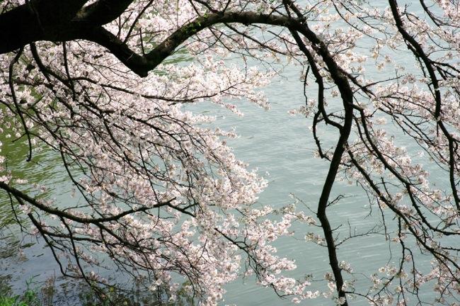 '10桜12