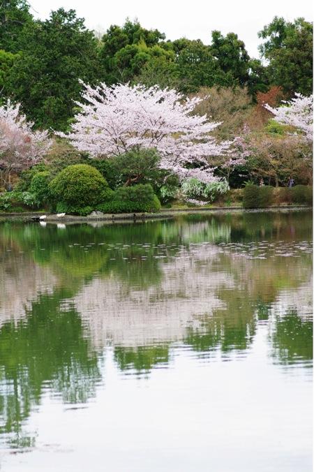 '10桜123