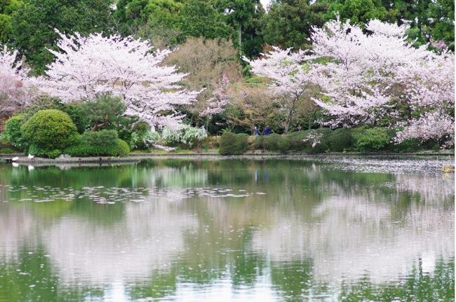'10桜124