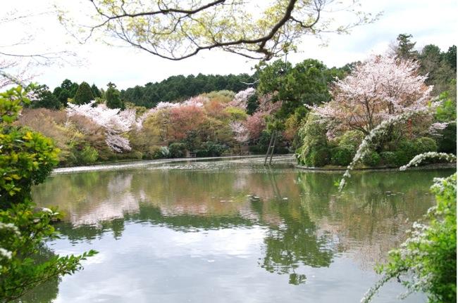 2010sakura125
