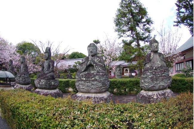 2010sakura126