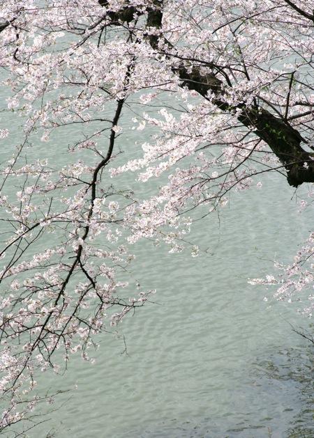 '10桜13
