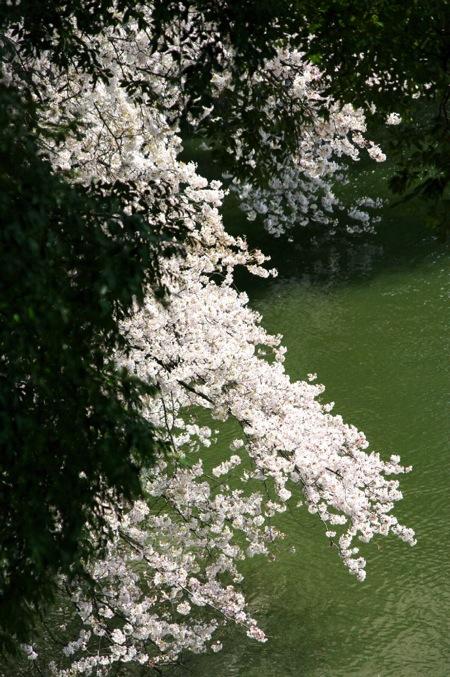'10桜14