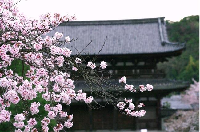 2010sakura143